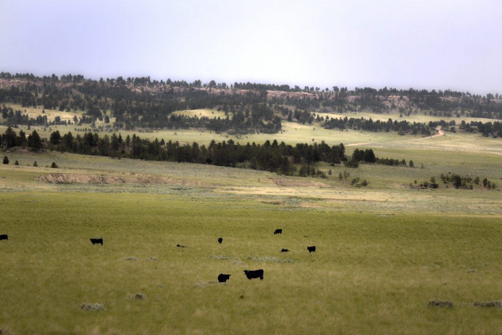 Bull-Mountain-Ranch-Billings-MT28-scaled