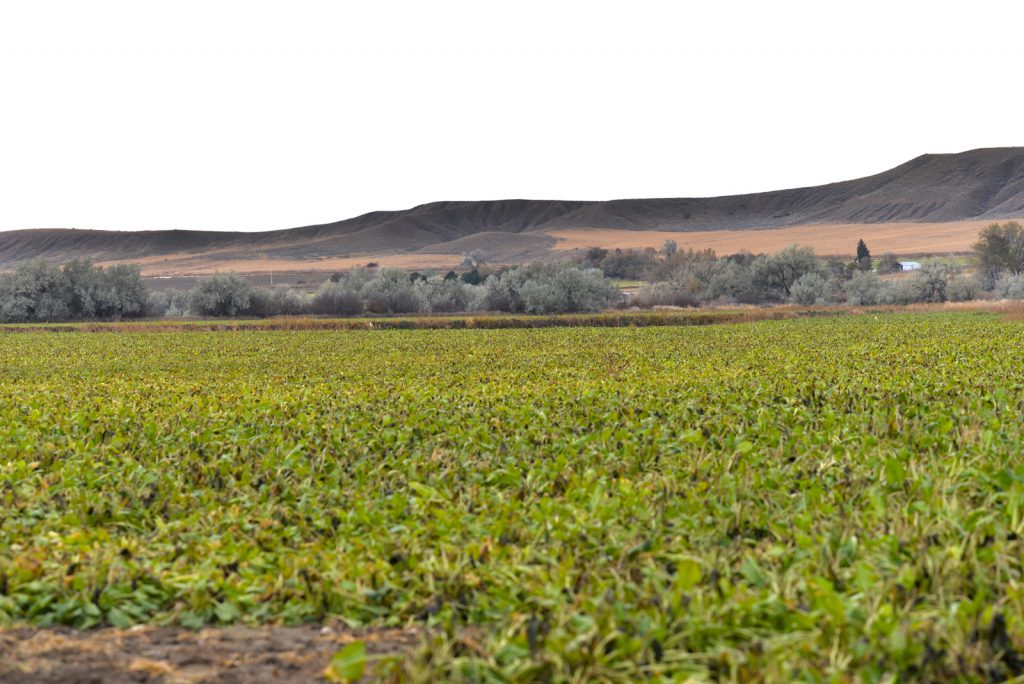 Clarks-Fork-Irrigated-Farm-Fromberg-Montana1