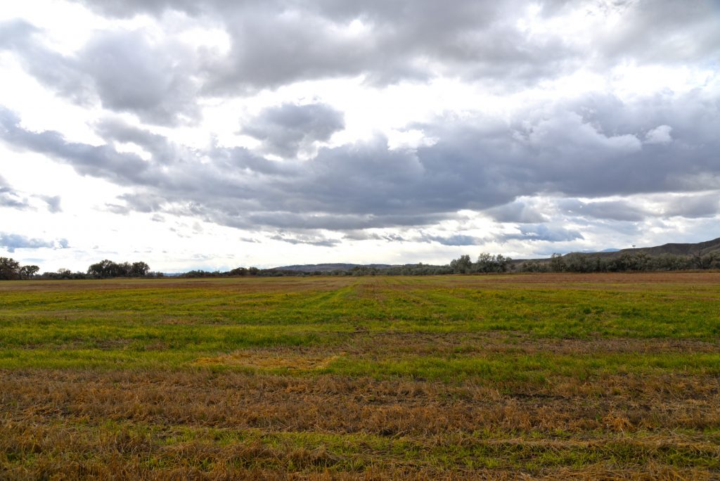Clarks-Fork-Irrigated-Farm-Fromberg-Montana16