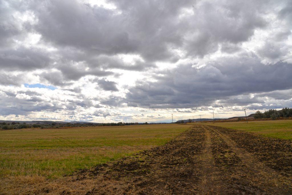 Clarks-Fork-Irrigated-Farm-Fromberg-Montana19