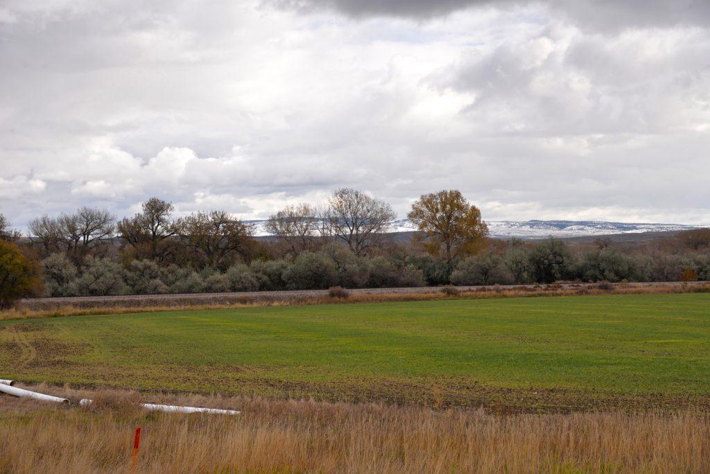 Clarks-Fork-Irrigated-Farm-Fromberg-Montana24