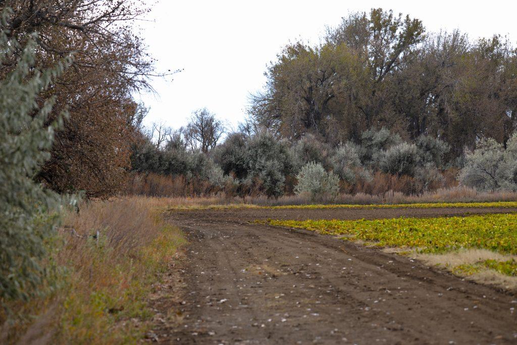 Clarks-Fork-Irrigated-Farm-Fromberg-Montana4