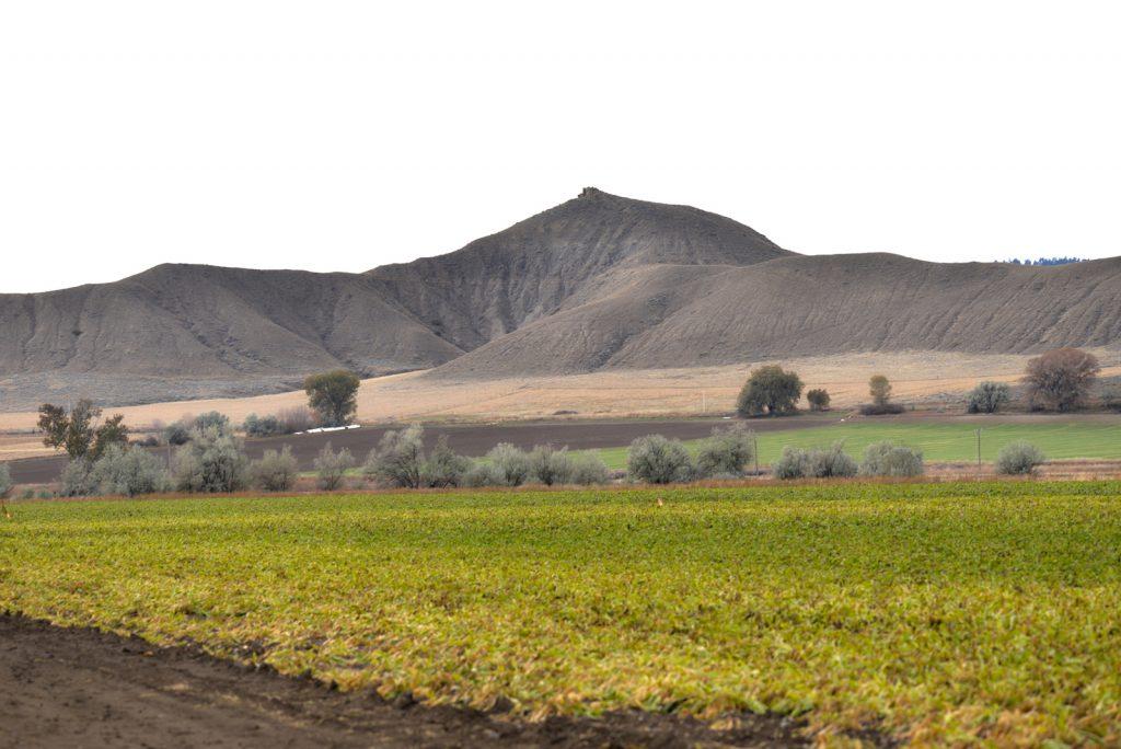 Clarks-Fork-Irrigated-Farm-Fromberg-Montana8