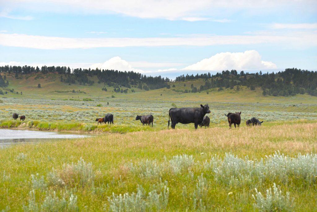 Ranch-for-Sale-Broadus-Montana37