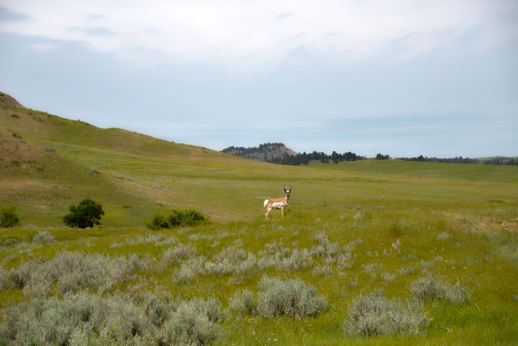 Ranch-for-Sale-Broadus-Montana38
