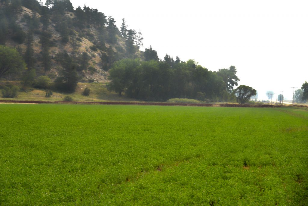 The Holmgren Ranch18