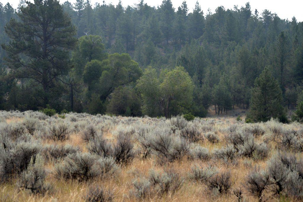 The Holmgren Ranch43