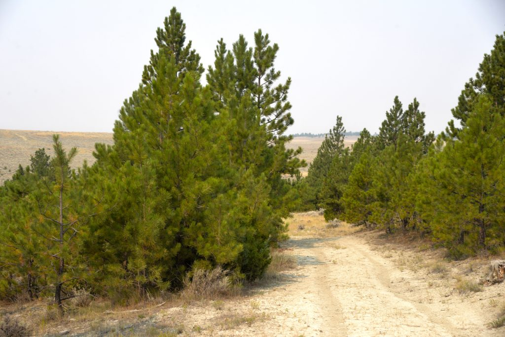 The Holmgren Ranch45