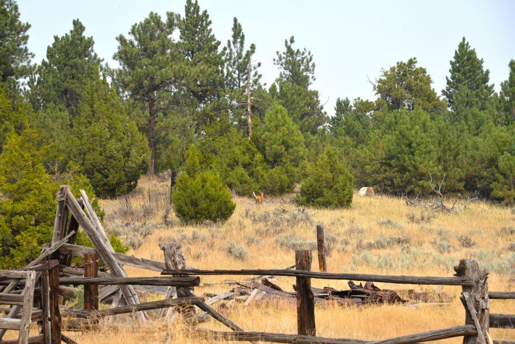 The Holmgren Ranch52