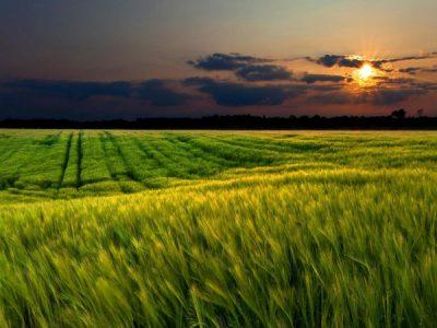 Big-Sky-Grasslands